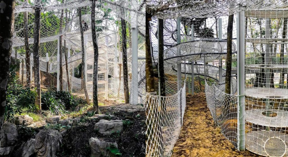 Chiński las zamienił się w niezwykły park linowy