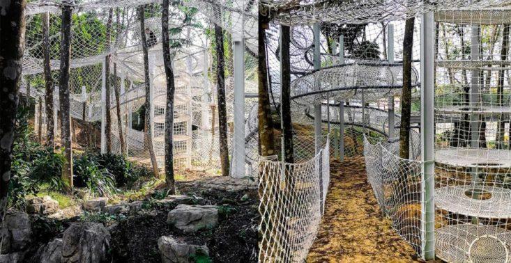 Chiński las zamienił się w niezwykły park linowy<