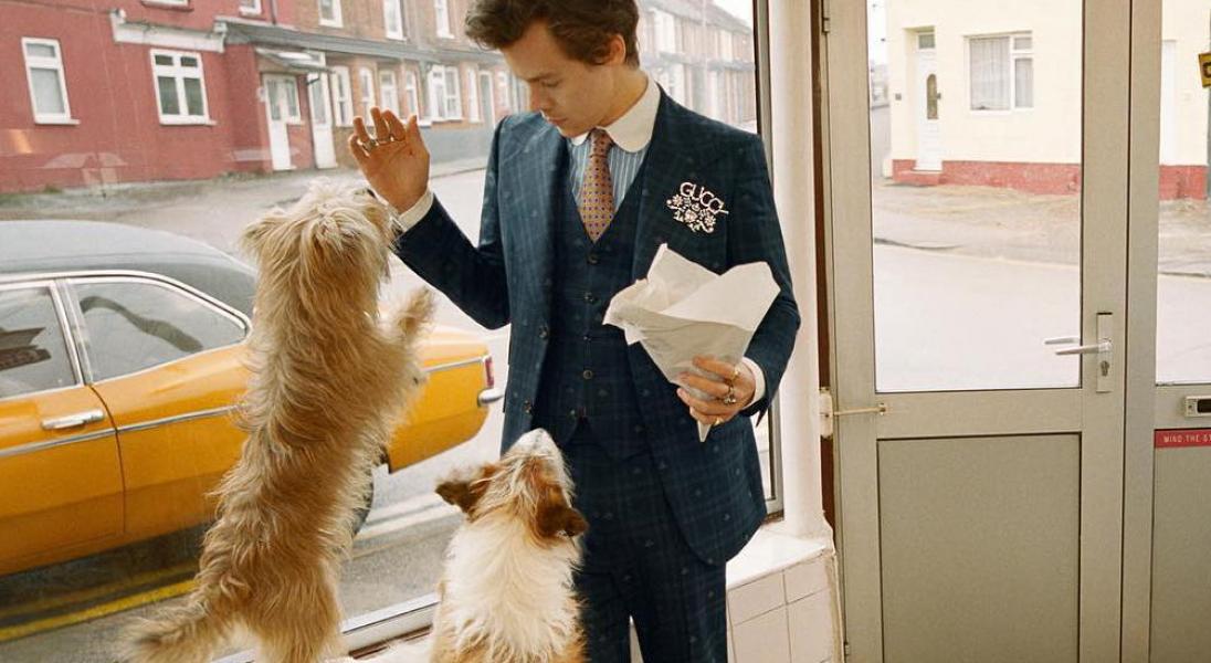 Harry Styles pozuje z... kurą i psami w nowej kampanii Gucci Tailoring