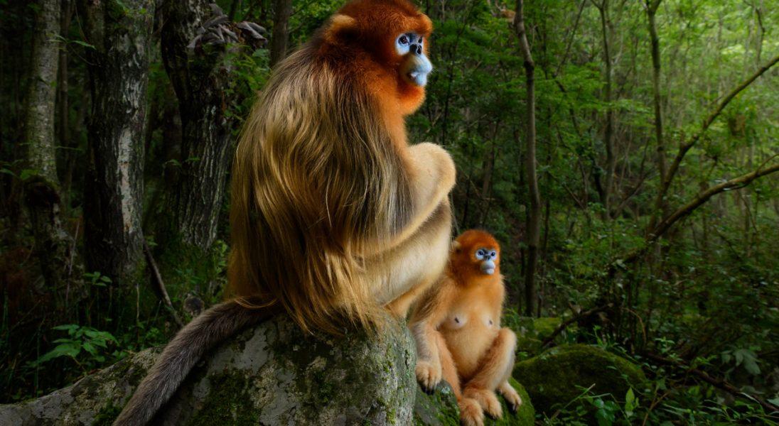 Wyłoniono laureatów tegorocznego konkursu fotograficznego Wildlife Photographer of the Year