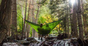 Czym są kąpiele leśne i jak wpływają na nasze zdrowie? Oto 5 rad, jak zacząć własną praktykę