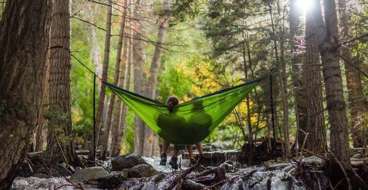 Czym są kąpiele leśne i jak wpływają na nasze zdrowie? Oto 5 rad, jak zacząć własną praktykę<