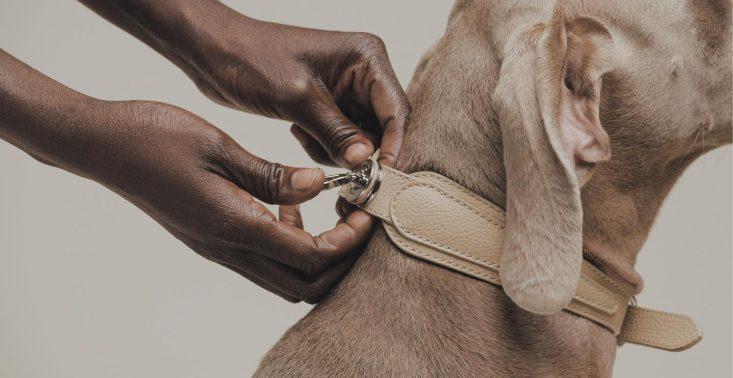 Pagerie, czyli luksusowa marka dla… psów<